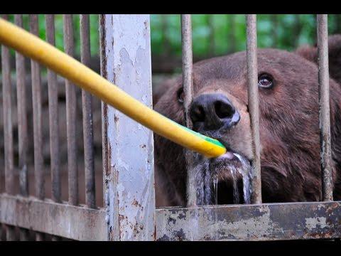 Download Youtube: Fighting for animal welfare in Lebanon