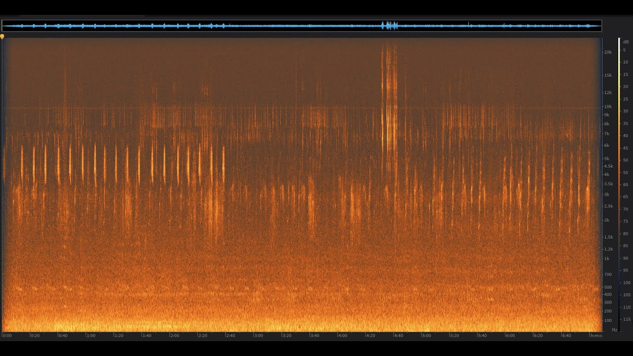 Dawn Chorus: Santa Cruz Mountains, California | Spectrogram Follow