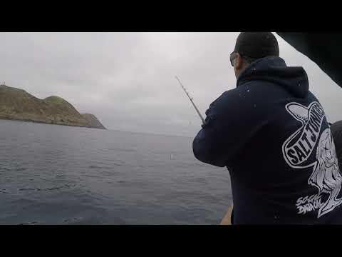 Fishing Yellowtail Hookup Baits Caivo Jigs