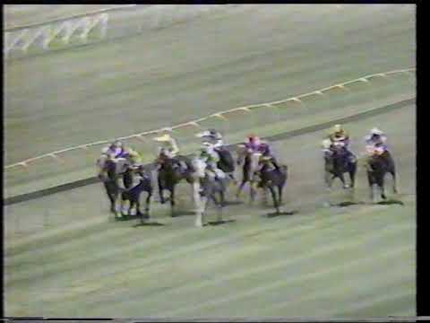 1991 NZ Stakes