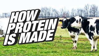 How Is Your Protein Supplement Made? - An Inside Look at Whey Protein - BPI Sports