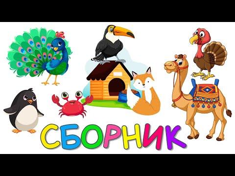 СБОРНИК - Новые серии | Птички, Предлоги, Домики 2 | Развивающие мультики для детей - Монтессори