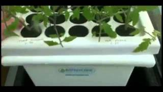 Cheap And  Simple Hydroponics - The Kiss Method