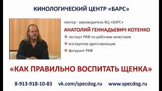 АНОНС к курсу по воспитанию собаки. Кинологический центр Барс. Дрессировка собак в Новосибирске.