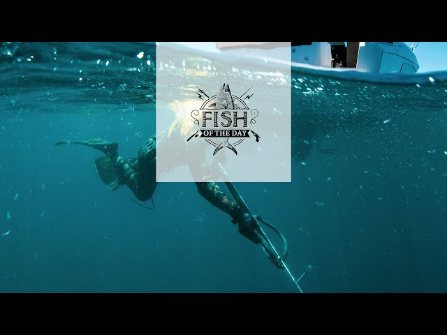Fish of the Day I Saison 4. Épisode 2 – Quand les dauphins s'invitent au voyage