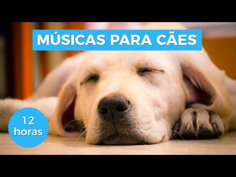 MÚSICAS PARA ACALMAR SEU CACHORRO (TESTADO)