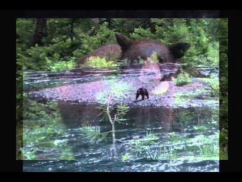 Idaho Black Bear Rehab, Inc.