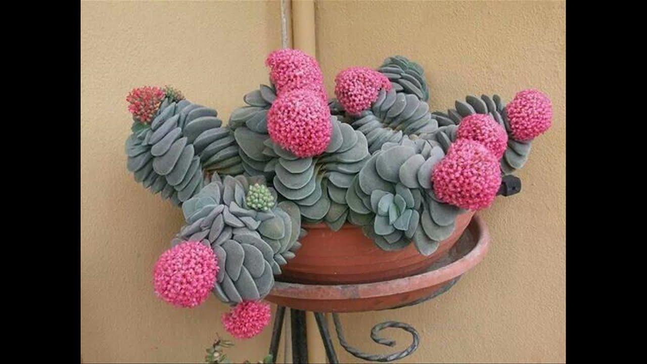 Cactus imprecionante y raros del mundo dj kikito youtube - Cactus raros fotos ...