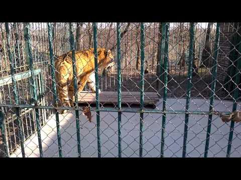 Gradina Zoologica Sibiu