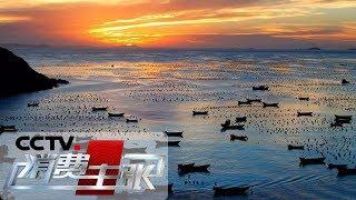 《消费主张》 20190924 海鲜消费市场调查(下):舟山渔场| CCTV财经