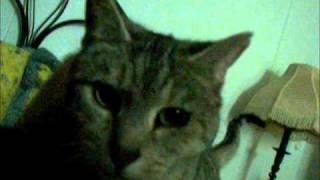 My Kitty Chow chow Thumbnail