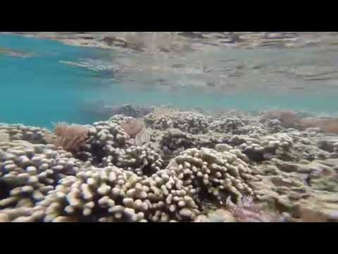 Coconut Island's Reef Ledge