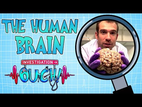 Science For Kids | Body Parts - THE HUMAN BRAIN | Experiments For Kids | Operation Ouch