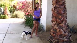How to Potty Train The Dogs   How to Potty Train Your Dog in 7 Days