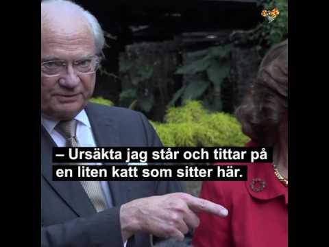 The swedish king sees a cat during an interview