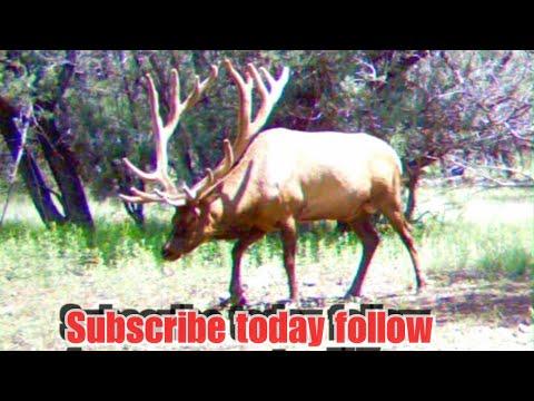 San Carlos ,scouting For Elk Part,1
