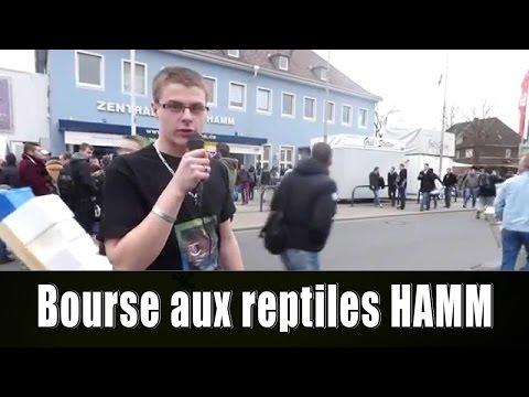 BOURSE AUX REPTILES DE HAMM (03/15)