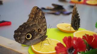 Впервые в Верхней Салде. С 1 по 18 февраля выставка живых тропических бабочек