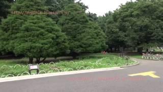 Japan Trip 2014 Tokyo Shibuya  Stroll in the Yoyogi-park.