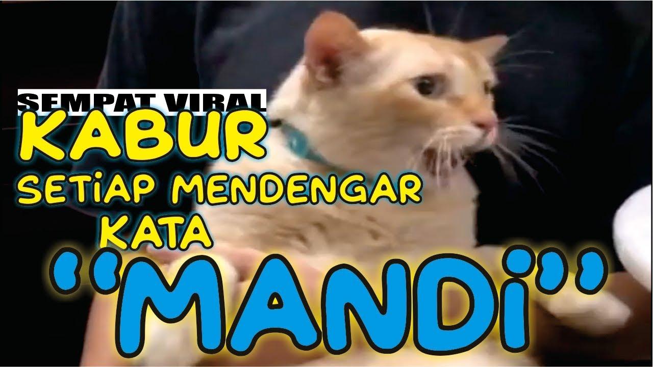 Download 76+  Gambar Kucing Lucu Dengan Kata Kata Terbaik Gratis