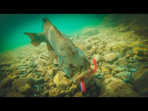 How To Catch Bass With Plastic Worms - Amazing Underwater Footage!!
