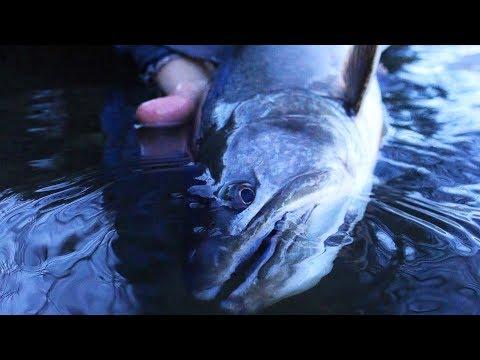 Catching Fish That Eat Salmon Eggs!