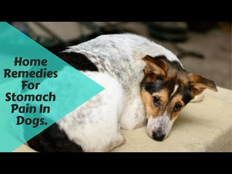 Home Remedies For Stomach Pain In Dogs