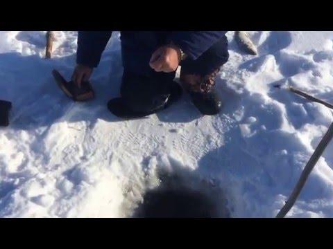 ловля сига зимой на амуре снасти