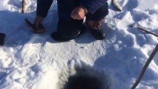 видео: Ловля сига зимой на Амуре