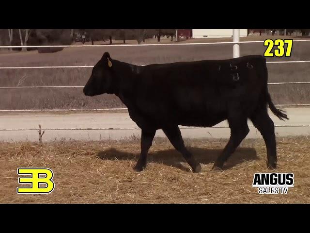 Benoit Angus Lots 236 - 238