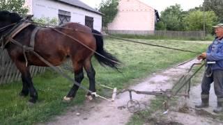 uprawa roli koniem