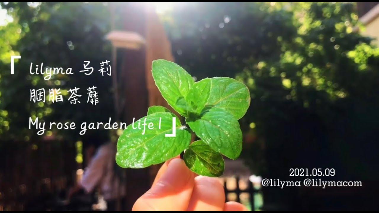 情绪与表达 Emotions and Expression Part 19:胭脂荼蘼 My Rose garden life