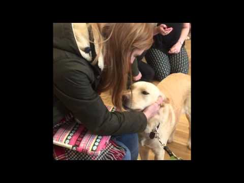 University Students meet Guide Dogs