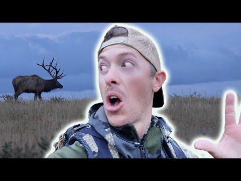 My Best Hour of Elk Hunting   Bugle Fest!