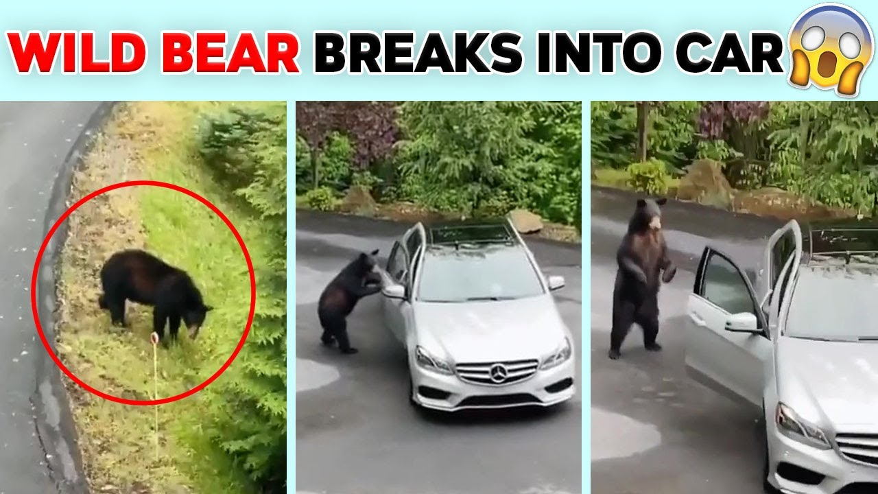 Videos With Unexpected Endings You Will Never Guess