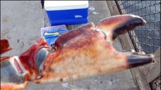 2015 Ловля Крабов, Рыбалка Мини Влог с Берега Океана, США (Crabbing Fishing America)