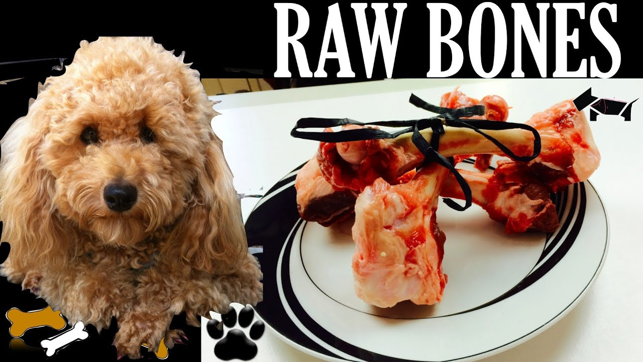 How To Make Raw Dog Food For Puppies