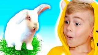 Five Little Bunnies   Kids Song   Tamiki Amiki   Children