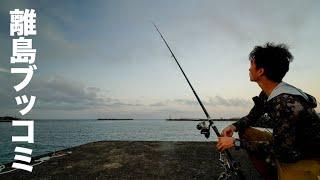 離島フェリー乗り場の横で南方の超高級魚を狙う港のブッコミ釣り【徳之島編 #2】