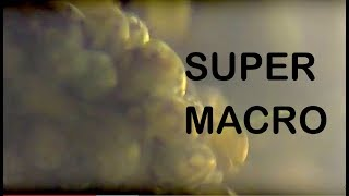 SUPER MACRO VIDEO Ostracod Algae Eaters super fast swimmers legs 2400 rpm (Eucypris virens)