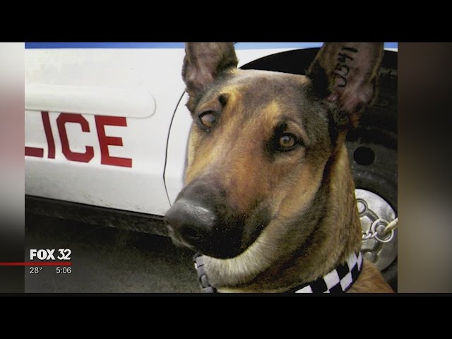 Sad and Emotional Farewell to CPD K-9