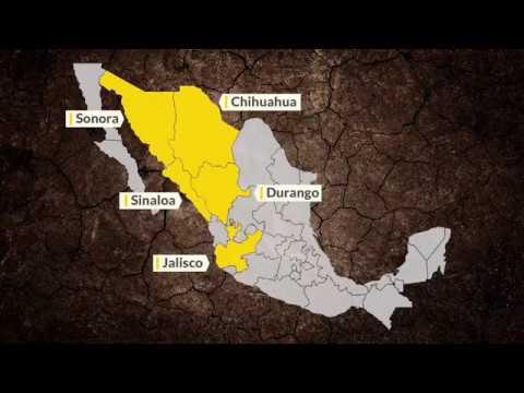 Mineras amenazan bosques mexicanos