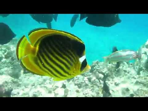 Sharm El Sheikh Red Sea - Coral reef RasKaty