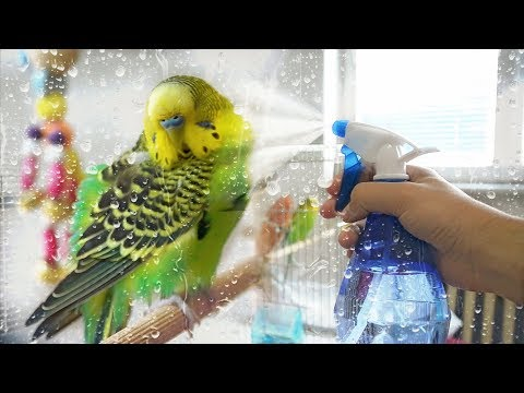 How to Give Your Budgie a Bath  Learn All About