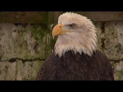 NJ Bald Eagle Population At All Time High