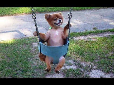 """Dogs Love Swings Compilation"" || CFS"
