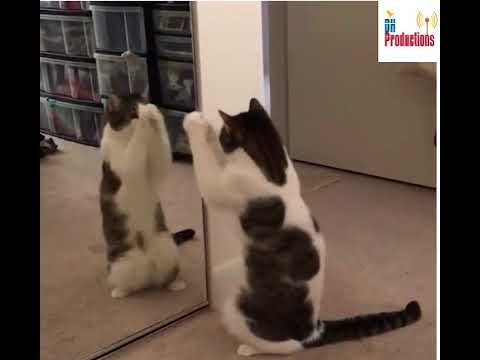Dancing Cats Collection | So Cute | DH Productions