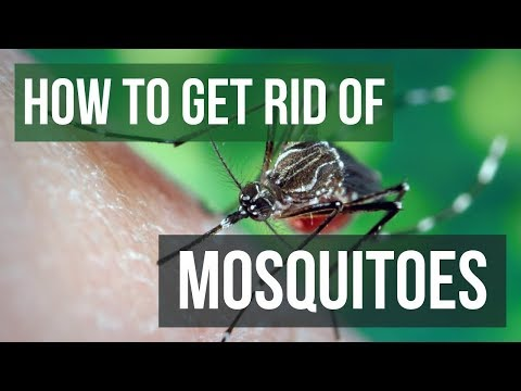 how-to-get-rid-of-mosquitoes-in-your-yard-(4-easy-steps)