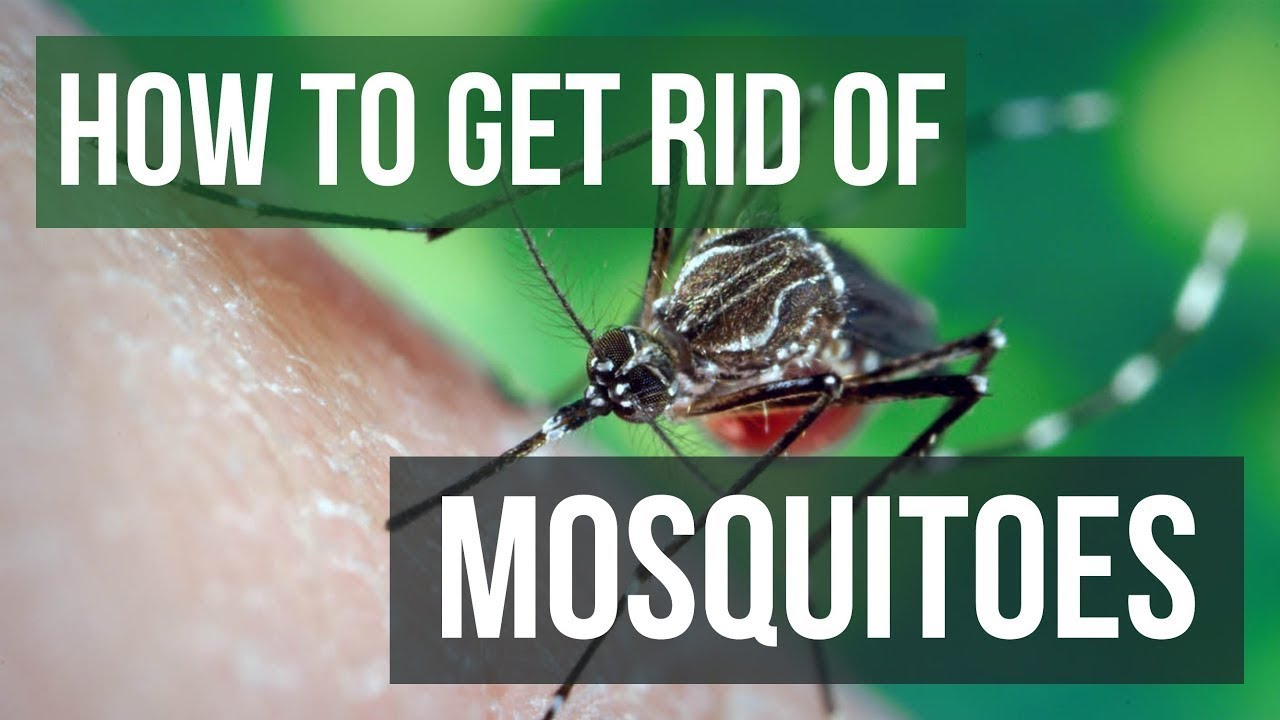 Get Rid Of Mosquitoes In Your Yard
