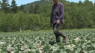 Китайцы захватили земли в Холмском округе